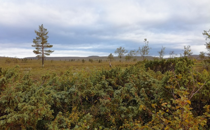 Poslední část laponské výpravy. Kilpisjärvi a NP Pallas-Yllästunturi.